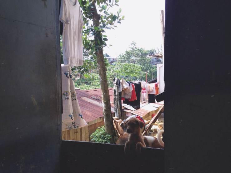 dog in batam